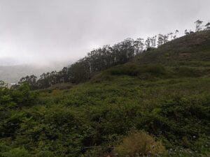 Ruta por los senderos y caminos de Guamasa