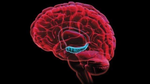 El ejercicio físico y la renovación neuronal